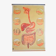 Poster vintage del Museo dell'Igiene di Dresda, Germania, anni '20