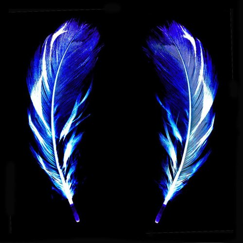 Flight Of Fancy Electric Blue Feathers Conceptual Color Photography 2017 For Sale At Pamono