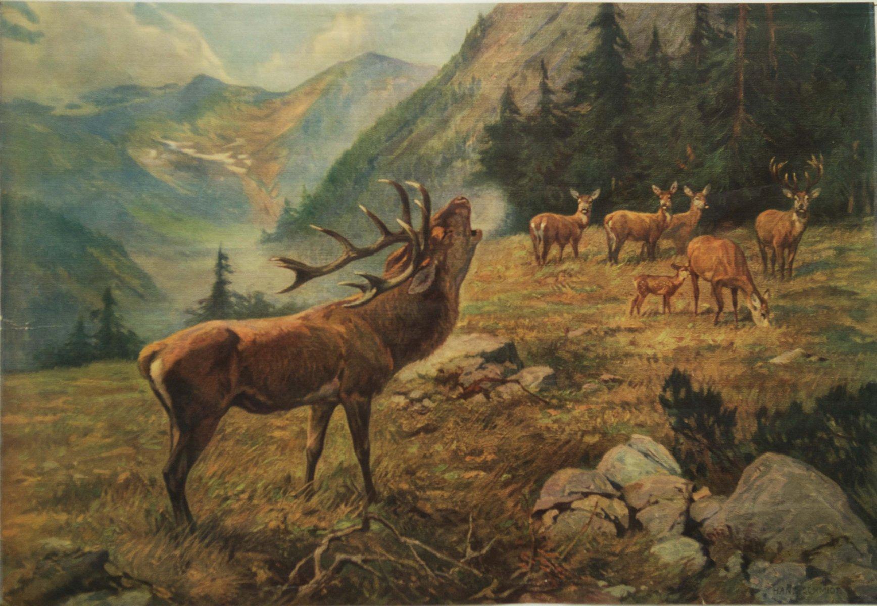 Deutsches Vintage Hirsch Schulposter