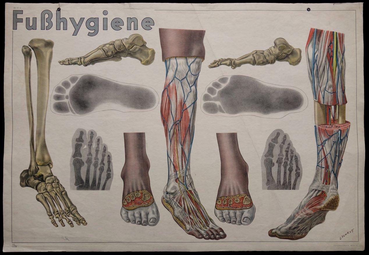 Anatomische Fußhygiene Wandkarte von L. Schrott für Hofmanndruck bei ...