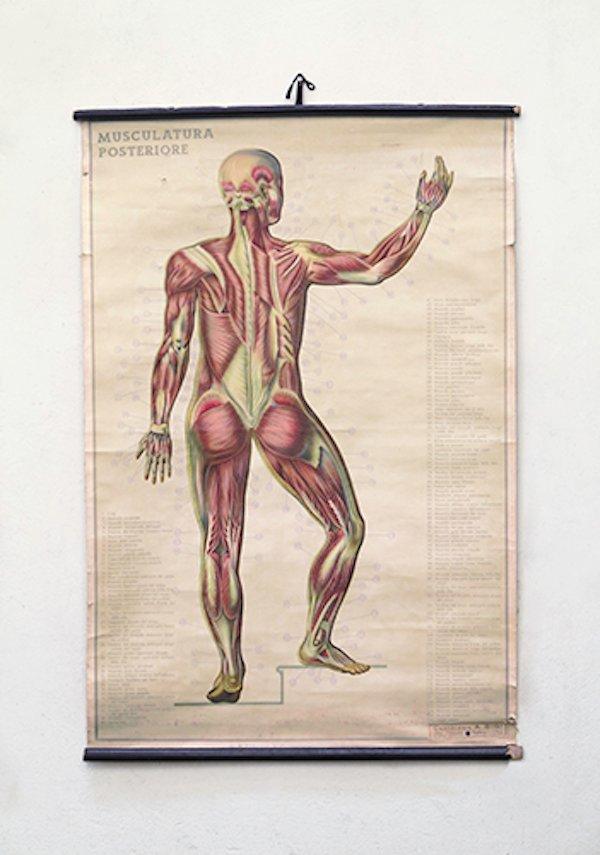 Italienische Anatomie Wandkarte bei Pamono kaufen