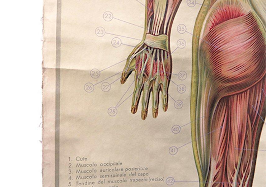Póster de pared italiano sobre anatomía en venta en Pamono