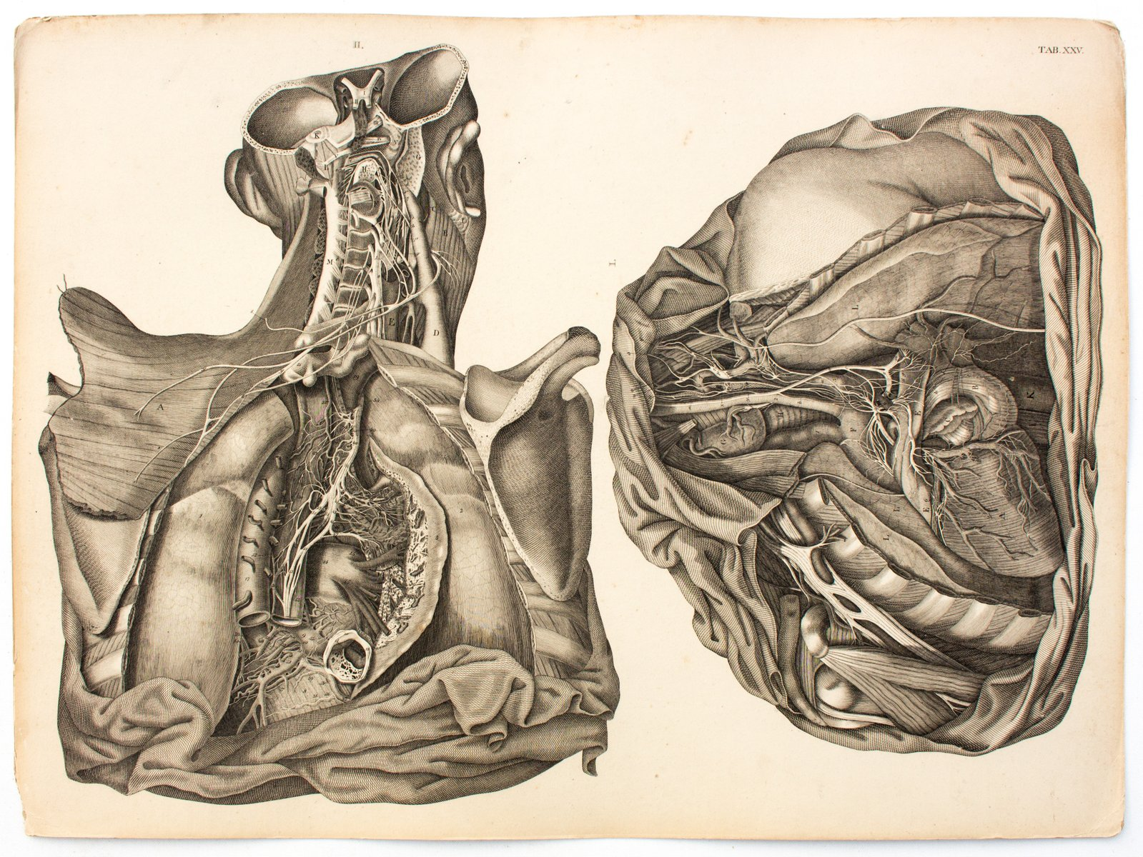 Human Body Anatomical Chart By M J Weber For Arnz Company 1830