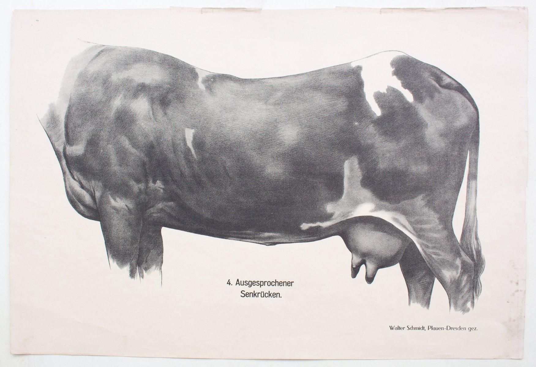 Beste Anatomie Einer Kuh Galerie - Anatomie Von Menschlichen ...
