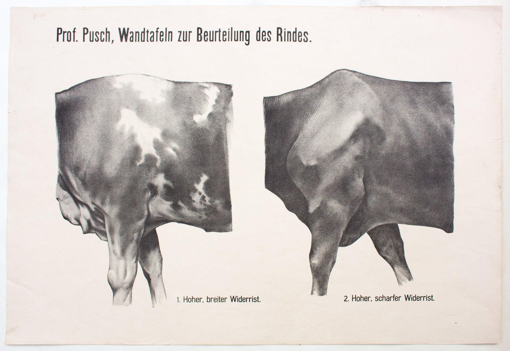 Ziemlich Kuh Lunge Anatomie Fotos - Anatomie Von Menschlichen ...