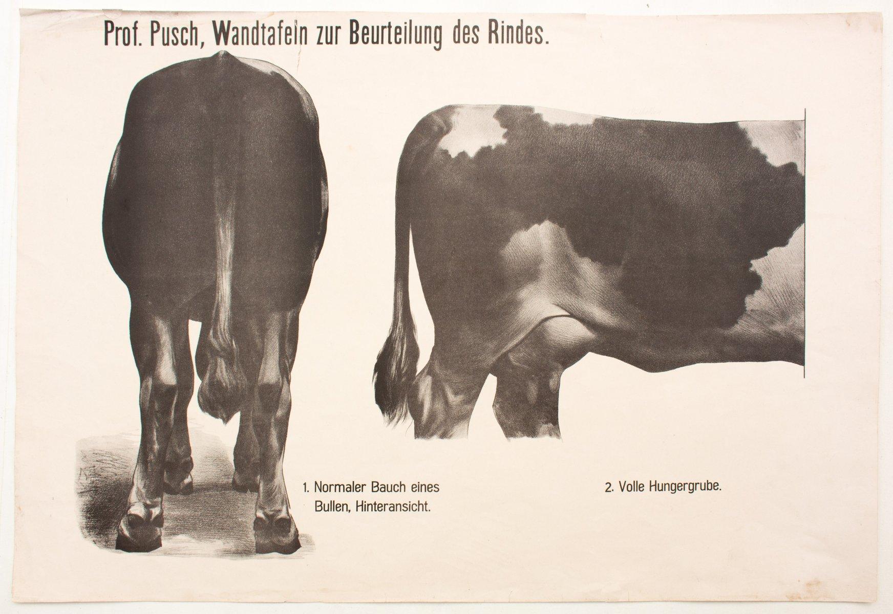 Berühmt Anatomie Der Kuh Zeitgenössisch - Anatomie Von Menschlichen ...