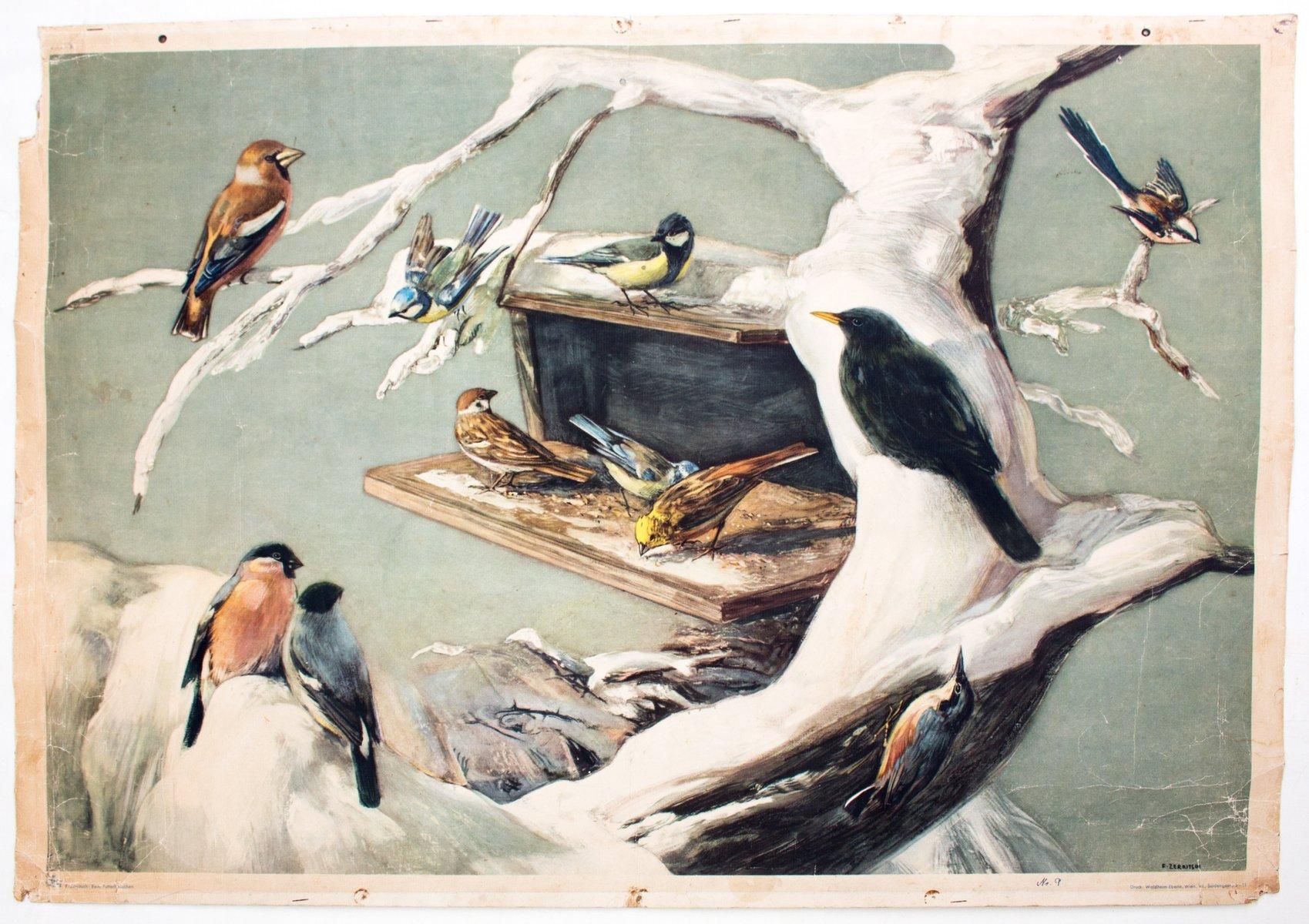 Vintage Vögel Wandkarte