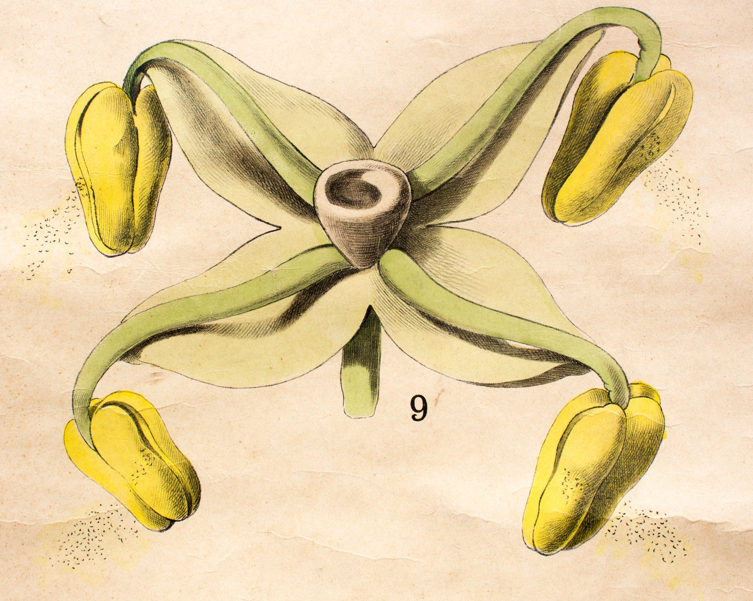 Educational Chart of the Biology of a Flower by Ross & Morin for ...