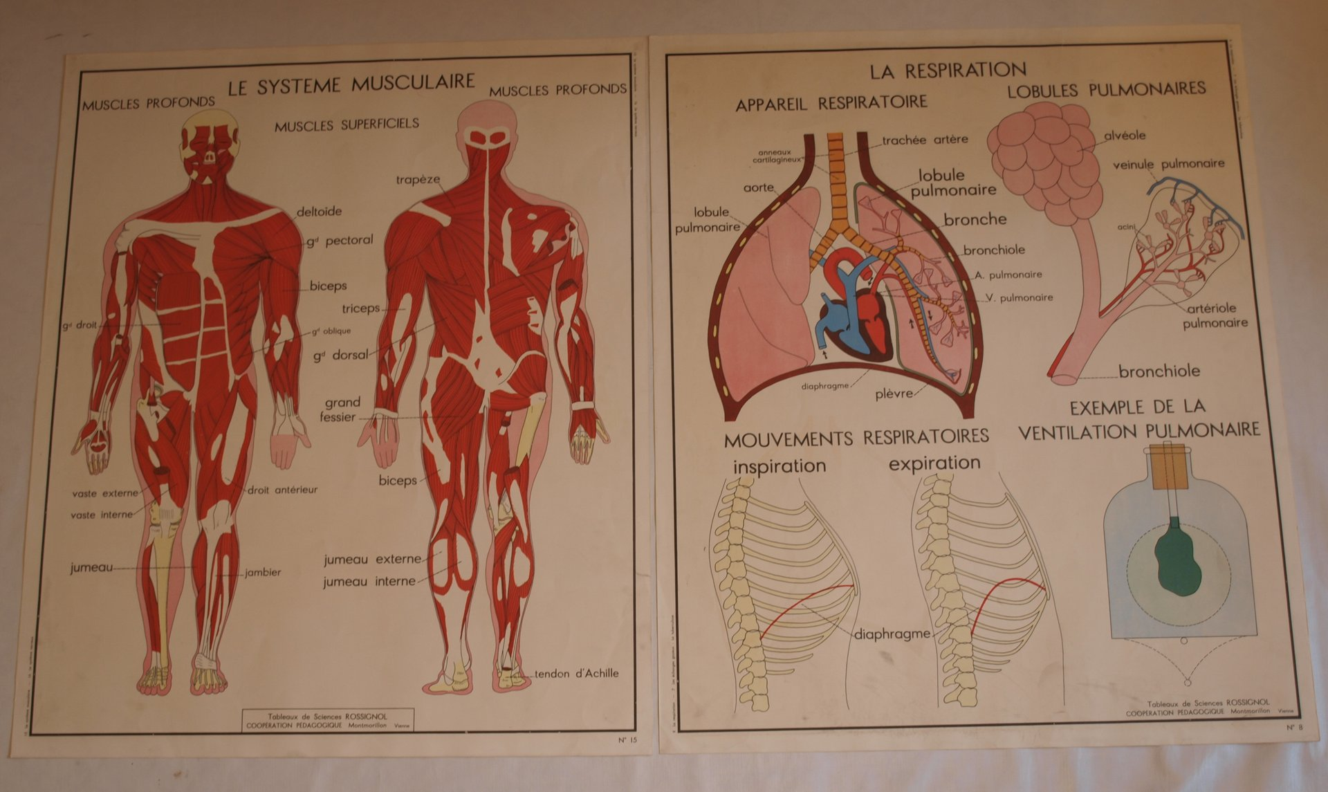 Vintage Anatomy Posters, 1950s, Set of 10 for sale at Pamono