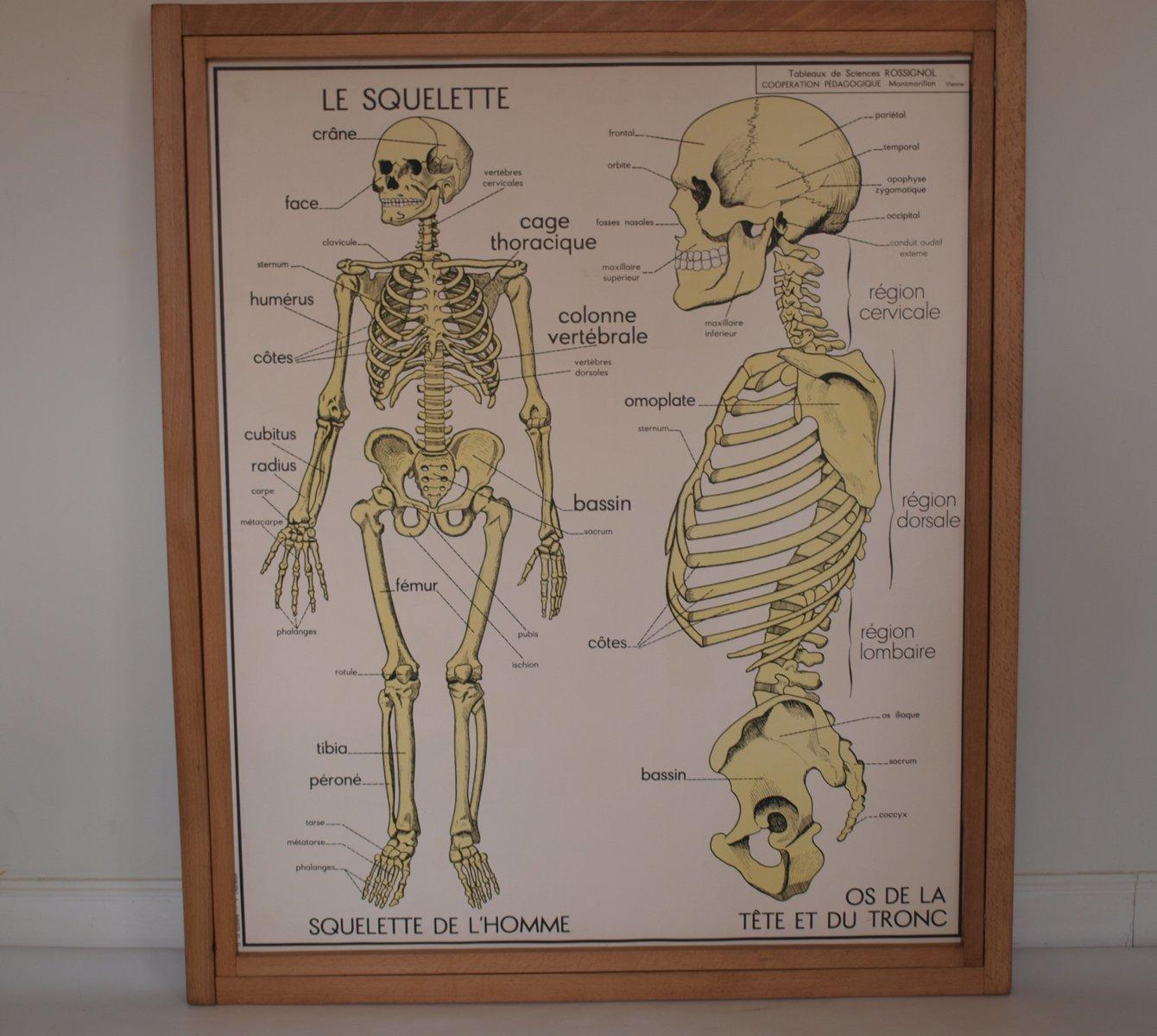 Vintage Anatomy Posters Gallery - human anatomy diagram organs